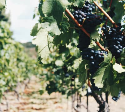 Village-Heights-Vineyards-1-1