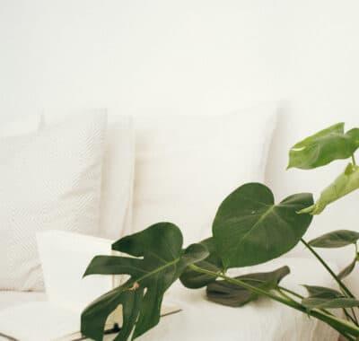 green-leaf-plant-in-brown-pot-inside-room-916339