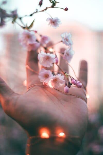 pink-petaled-flower-2814310